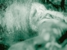 02 bushes-ikaria
