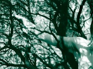 06 bushes ikaria