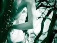07 bushes ikaria