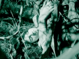 08 bushes ikaria