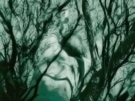 09 bushes-ikaria