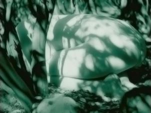 12 bushes-ikaria