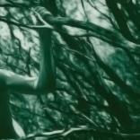 13 bushes-ikaria