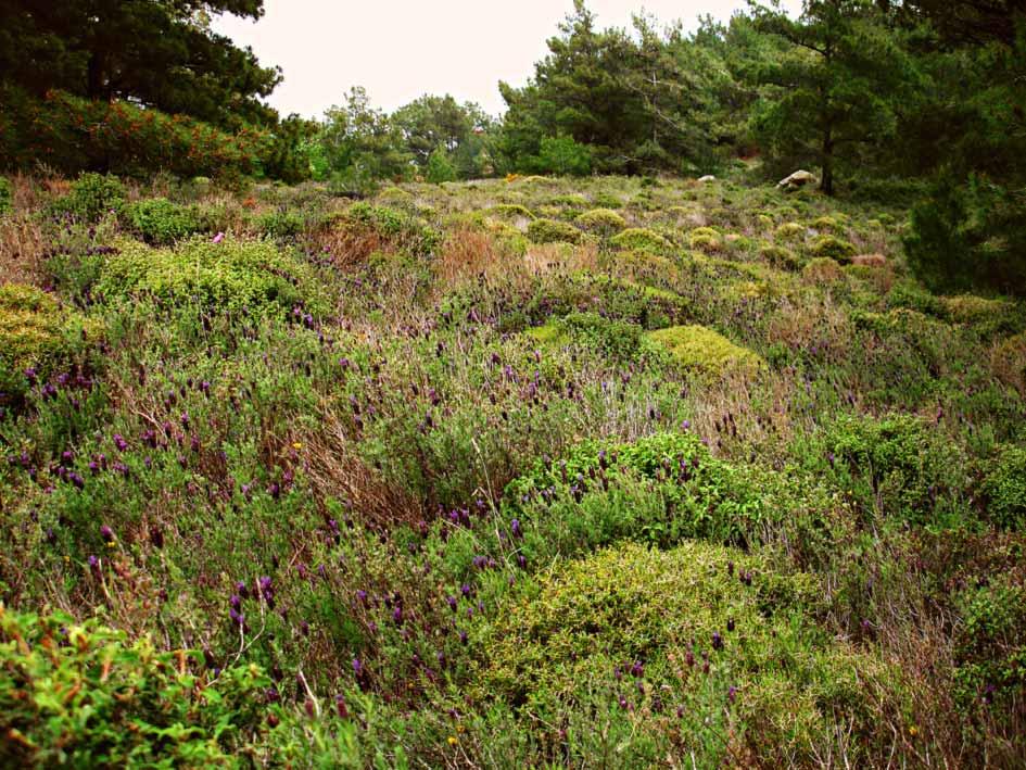 Ikaria thornland 1