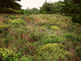 Ikaria thornland (1)