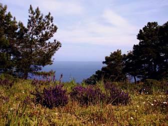 Ikaria thornland (2)