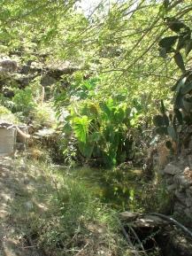sterna Ikaria