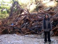Η Λίνα, ο ξεριζωμένος Πεύκος γίγαντας και τα κομμένα λάστιχα στην κατεστραμμένη  Χάλαρη