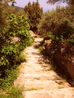 the stone-paved lane to the house