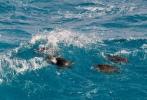 Τυχερή λήψη: Θαλάσσιες χελώνες κάνουν σερφ στην Ικαρία! Τα σχόλια είναι περιττά!
