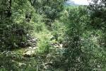 Nana to agrimi's Blog: Φρυγανότοπος με Αγκάθια στην Ικαρία - Ikaria potamos