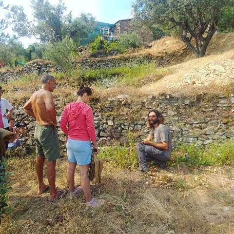 Collecting oregano in Thodoris'land